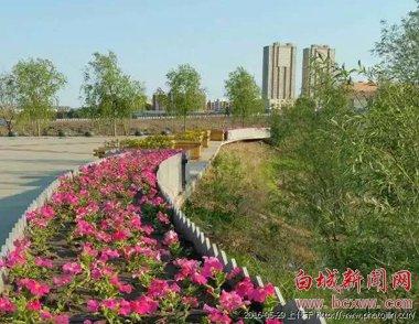 嫩江湾的花季