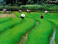 财政部详解三大举措健全农业支持保护制度
