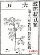 中国古代技术发明之二 大豆栽培