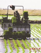 抓农时 有特色 重调整
