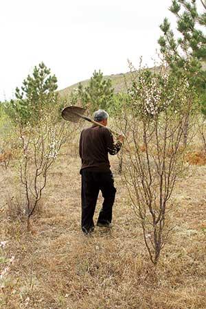 当地农民每天都能看到老何巡山时孤单的身影。