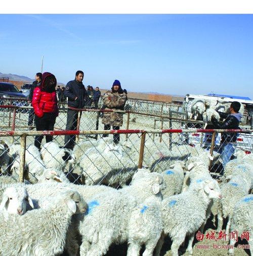 洮南万宝镇最大的牲畜交易市场