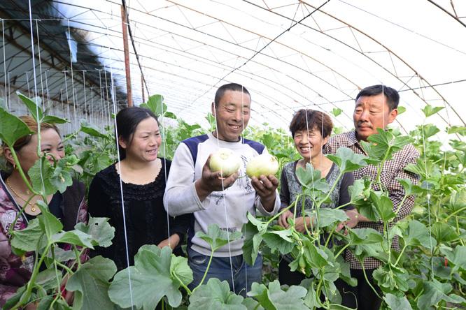 图为关洪彬(右二)在大棚内向顾客介绍香瓜的优点。