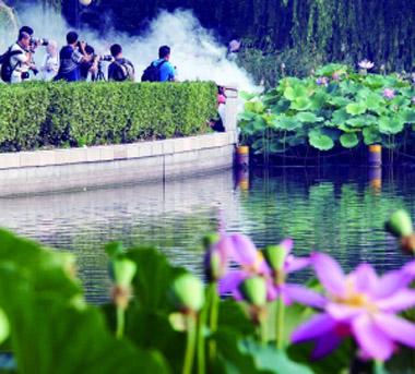 """莲花池公园,每天吸引着众多摄影爱好者前来拍摄荷花,有人为了追求""""特殊效果"""",竟在荷叶上点燃""""烟雾饼""""。影响了其他的游客,实在不该。庞铮铮/摄"""