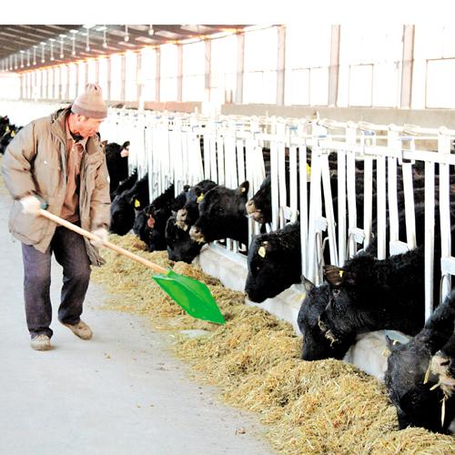 生态农牧 脱贫新路