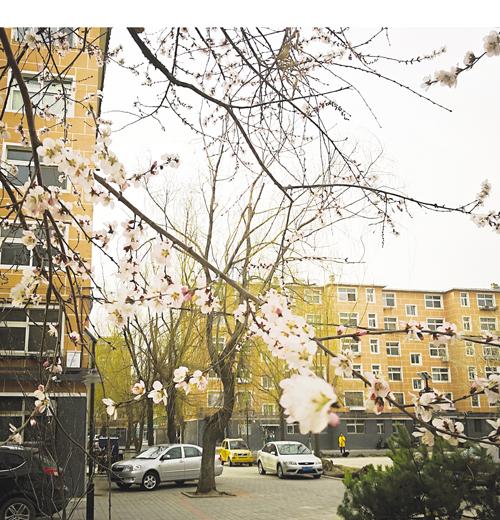 春天里 植新绿 美家园