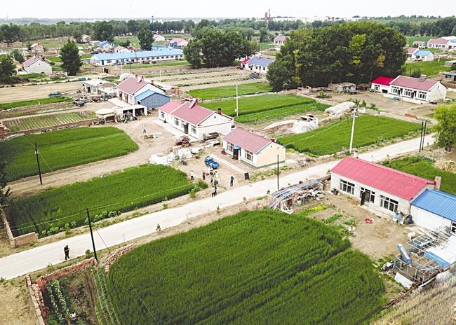 坦途镇西明嘎村庭院种植小冰麦。