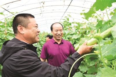 图为葛振海(左一)在村大棚产业园查看农作物生长情况。
